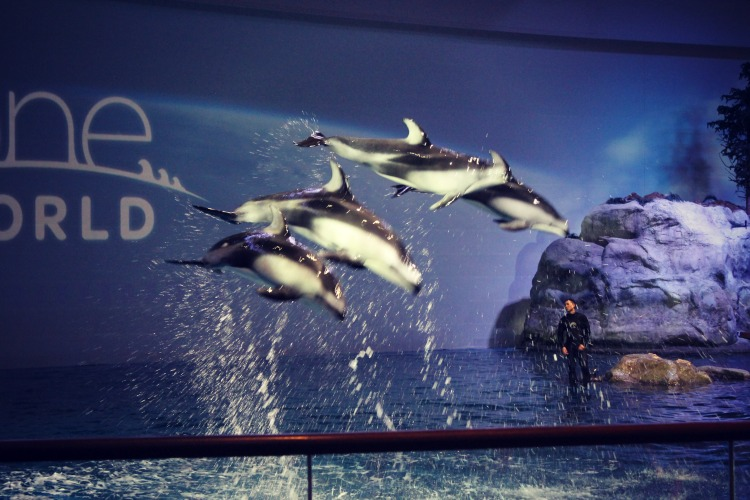 Shedd Aquarium Dolphins