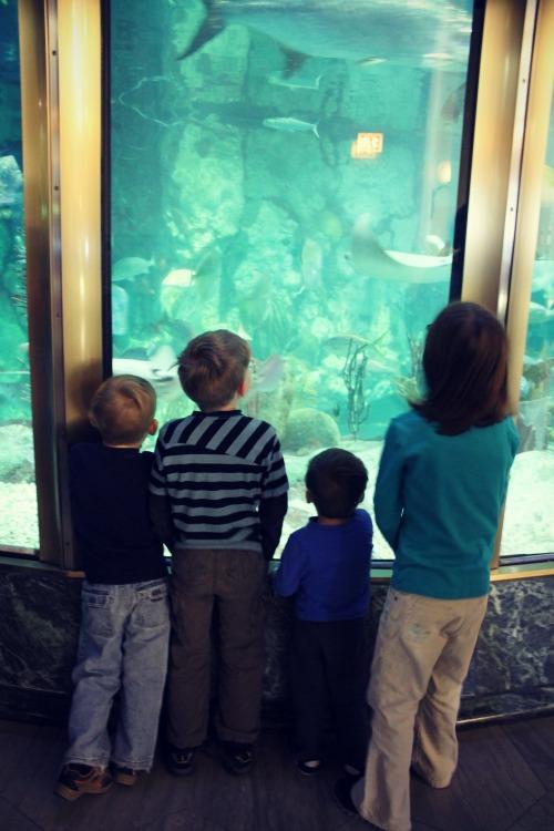 Shedd Aquarium Kids