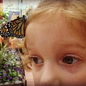 Krohn Conservatory Butterfly Show 2014 {Giveaway}