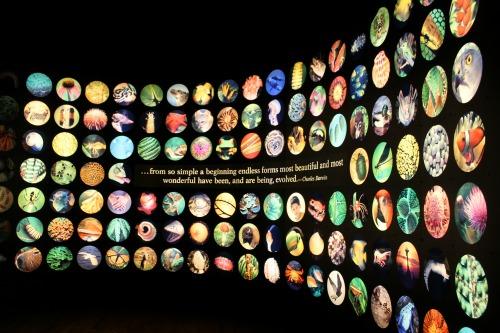 Field Museum Darwin