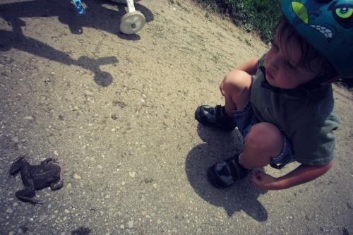 Giles Conrad Park Frog