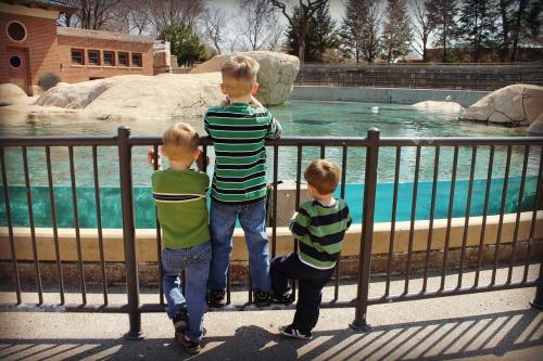 Lincoln Park Zoo Boys