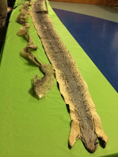 Harry Potter Snake Skins