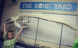 Clearwater Aquarium Bone Yard