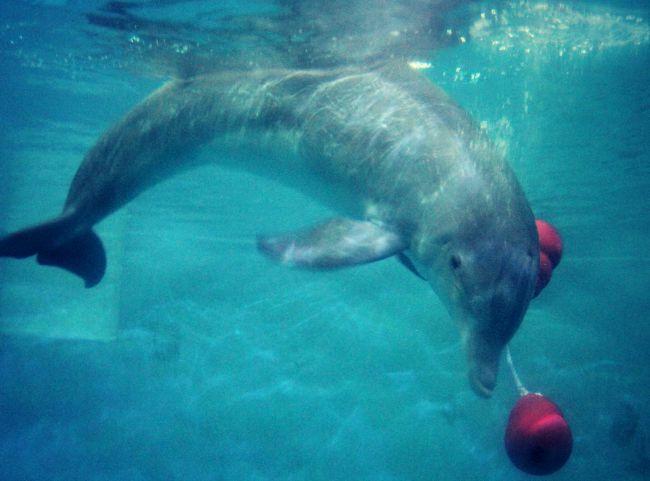 Clearwater Aquarium Dolphin