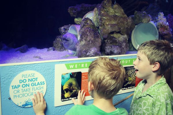 Clearwater Aquarium Eel
