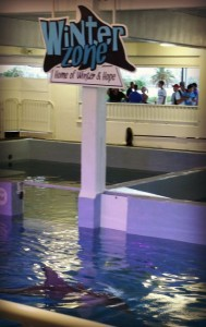 Clearwater Aquarium Winter Zone