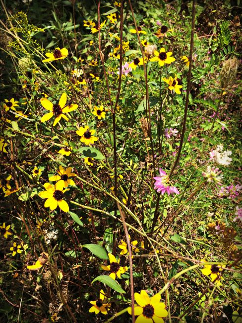 Wolsing Trails Flowers
