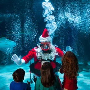 Water Wonderland with Scuba Santa at the Newport Aquarium