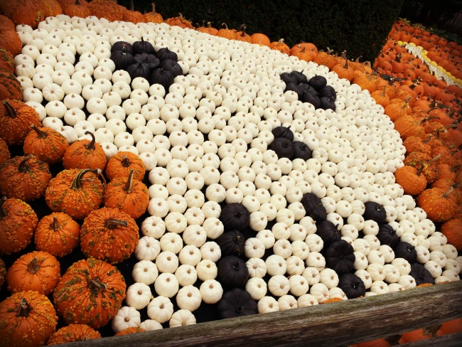 cedar-point-pumpkin-gourd-skull