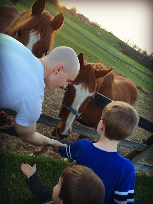 Horses Zanesville