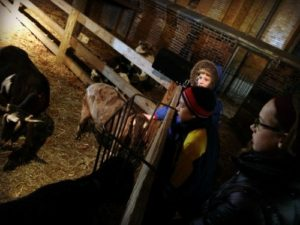 a-franciscan-christmas-goats
